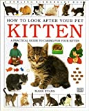 A Practical Guide to Caring For Your Kitten (How to Look After Your Pet Series)
