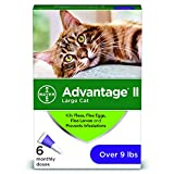 Bayer Advantage II for Large Cats Over 9 lbs, 6 Pack