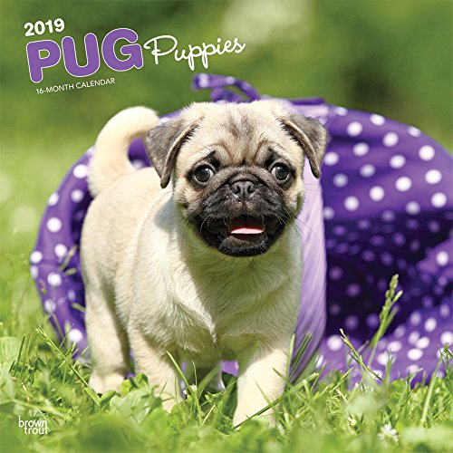 2010 Calendar Dog Mini - Pug Puppies 2019 12 x 12 Inch Monthly Square Wall Calendar, Animals Dog Breeds Puppies (English, French and Spanish Edition)