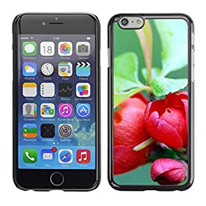 """Exotic-Star ( Plant Nature Forrest Flower 73 ) Fundas Cover Cubre Hard Case Cover para 4.7"""" iPhone 6"""