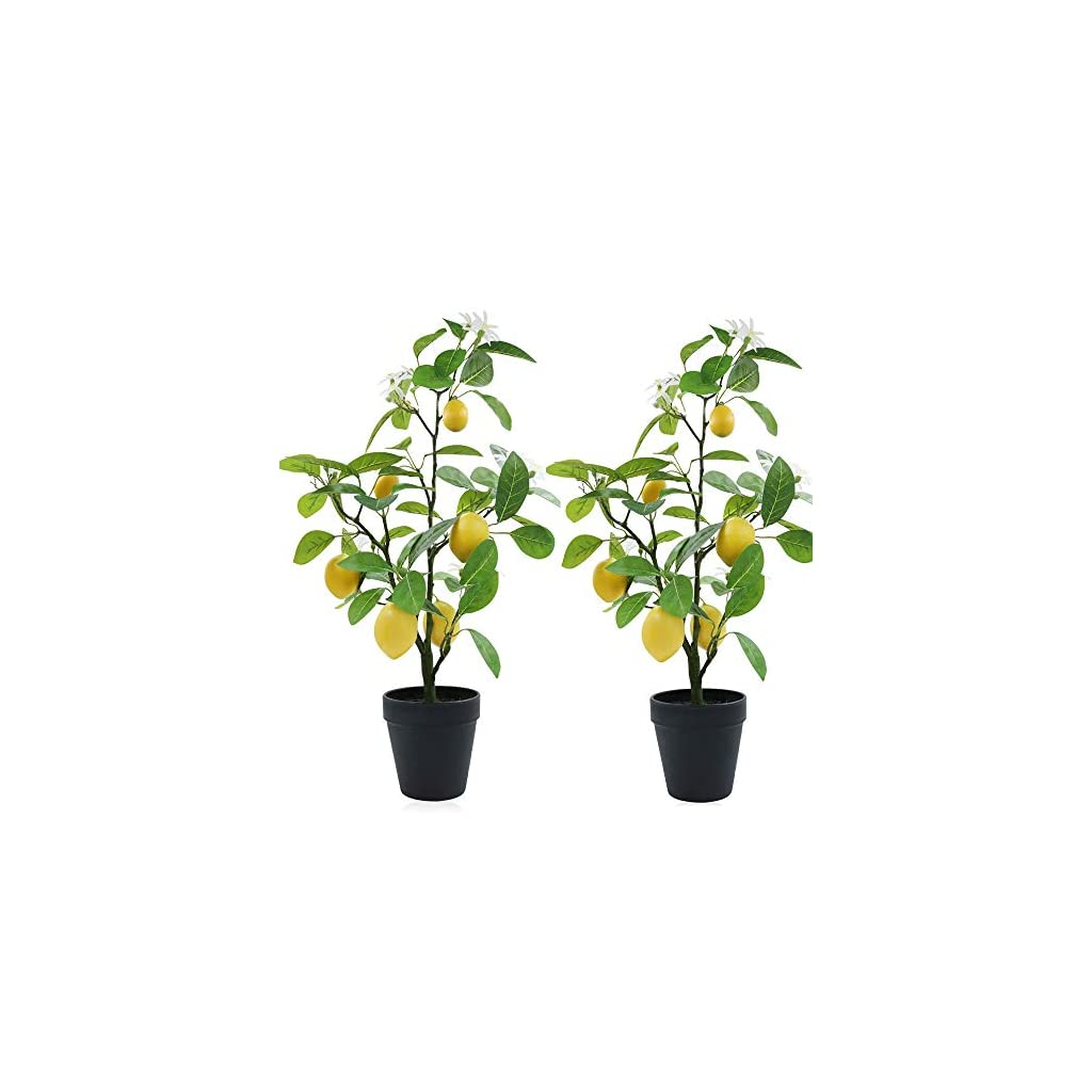 XiaZ 2 Pack Artificial Lemon Tree with Flower, 24″ Faux Plants Arrangement for Home, Living Room, Dining Room, Bathroom Decoration, Fake Yellow Lemons Fruits and Plastic White Flowers in Planter