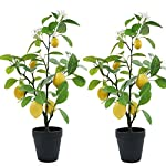 XiaZ-2-Pack-Artificial-Lemon-Tree-with-Flower-24-Faux-Plants-Arrangement-for-Home-Living-Room-Dining-Room-Bathroom-Decoration-Fake-Yellow-Lemons-Fruits-and-Plastic-White-Flowers-in-Planter