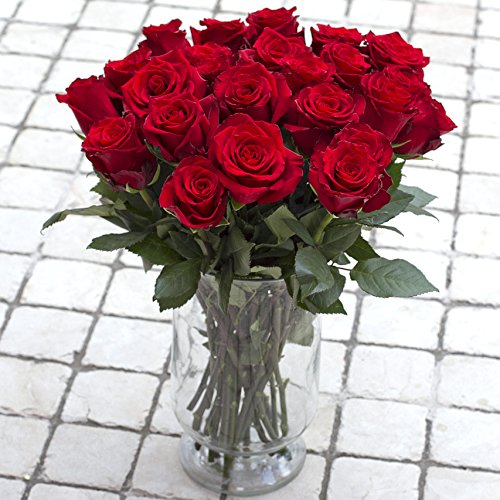 Greenchoice Flowers, 24 Fresh Cut Red Roses, 15.7 '' Long stem, No vase