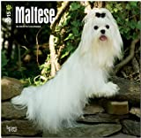 Maltese 2015 Square 12x12 (Multilingual Edition)