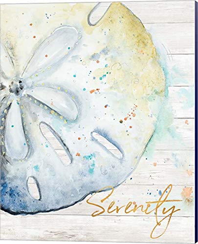 Pictures Sand Dollars - Serenity by Patricia Pinto Canvas Art Wall Picture, Museum Wrapped with Navy Blue Sides, 16 x 20 inches