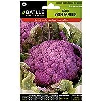 Semillas Hortícolas - Bróculi violet de Sicile - Batlle
