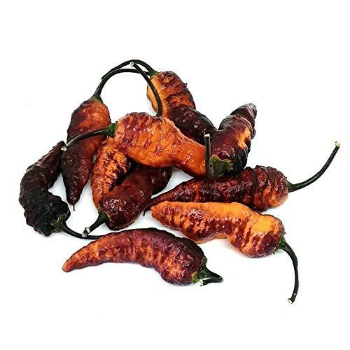 14+ Rare Organic Black Panther, Orange Superior