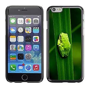 LASTONE PHONE CASE / Carcasa Funda Prima Delgada SLIM Casa Carcasa Funda Case Bandera Cover Armor Shell para Apple Iphone 6 / Baby Frog Leaf Nature Tropical Forest