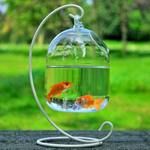 Haoun Hanging Fish Tank Creative Fish Vase Glass Transparent Goldfish Bowl for Home Decoration with Bracket (White Bracket)