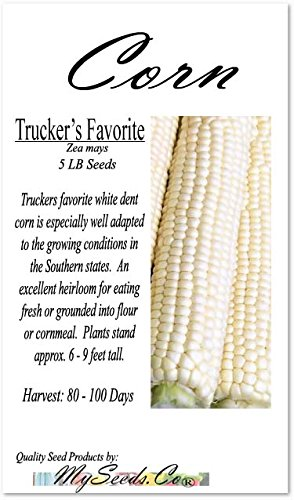 5 lb (7,000+ Seeds) Truckers Favorite White Dent Corn Seed - Excellent Heirloom for Eating Fresh or Grounded into Flour or cornmeal - Non-GMO Seeds by MySeeds.Co (5 lb Trucker White Corn)