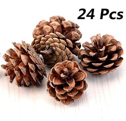 Bulk Package of Natural Pinecones-24 ()