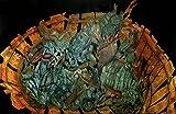 ''Crustacean's Lament'' Pen & Ink with Ink Wash on Paper - Original by Eli Portman