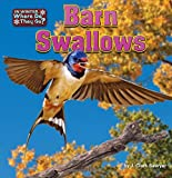 Barn Swallows (In Winter, Where Do They Go?)