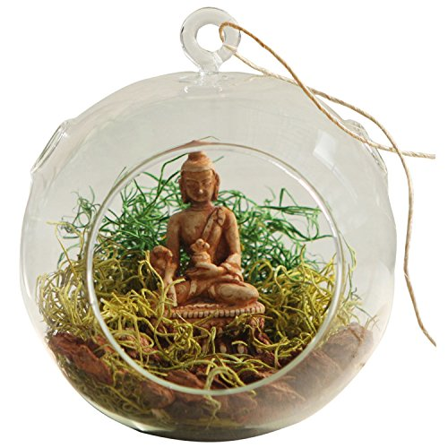 (Buddha Groove Spanish Hanging Moss Globe Terrarium with Small Buddha Statue |Comes with Multicolored Spanish Moss |Moss Made of Glass and Buddha Statue is Made of Resin)