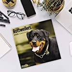 2020 Rottweilers Wall Calendar by Bright Day, 16 Month 12 x 12 Inch, Cute Dogs Puppy Animals Rottie's Canine 10