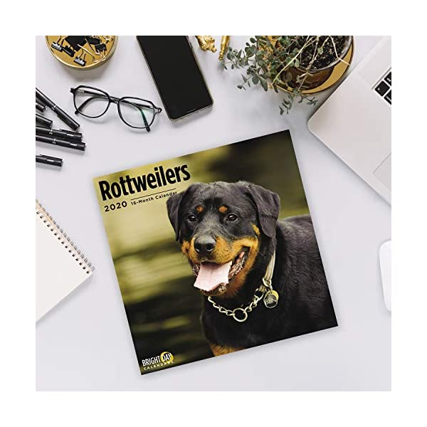2020 Rottweilers Wall Calendar by Bright Day, 16 Month 12 x 12 Inch, Cute Dogs Puppy Animals Rottie's Canine 5