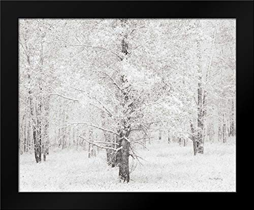 Snow Covered Cottonwood Trees Framed Art Print by Audit, ()
