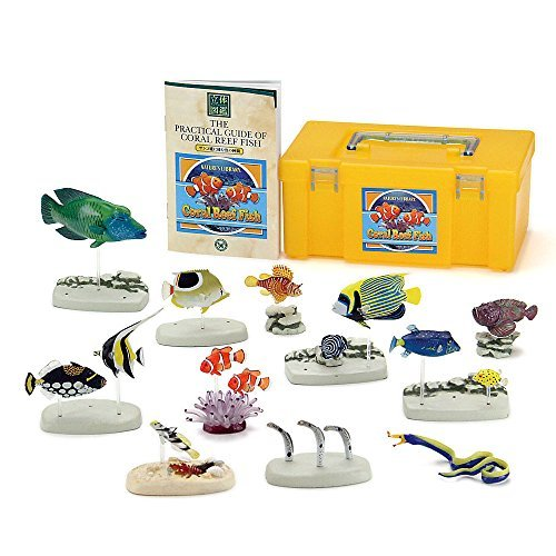 (Companion of fish that live in the coral reef) three-dimensional picture book Real Figure box Coral Reef Fish (japan import)