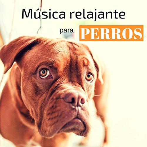 Msica relajante para perros  Sonidos de la naturaleza para mascotas, gatos, antiestrs, musicoterapia, mejor sueo