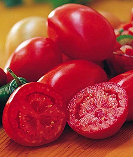 Fresh Salsa Hybrid Tomato Seeds - Also great for making light Italian sauces. !!(10 - Seeds)