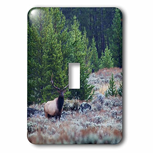 Danita Delimont - Animals - Rocky Mountain Bull Elk in Wilderness - Light Switch Covers - single toggle switch (lsp_231976_1)