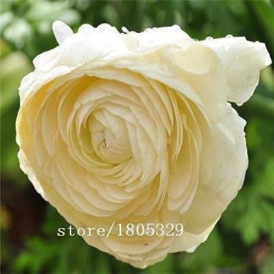Original Pack 20 Seeds / Pack, White Impatiens Flowers Seeds,White Camellia Balsamine,Impatiens seeds, potted impatiens