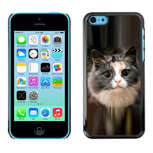 TaiTech / Case Cover Housse Coque étui - Cute Cat Feline Pet Furry Grey Longhair - Apple iPhone 5C