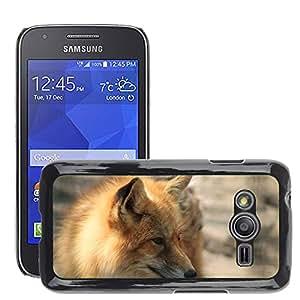 Etui Housse Coque de Protection Cover Rigide pour // M00108223 Fox Red Fox TÅ ± zróka Wild Animal // Samsung Galaxy Ace4 / Galaxy Ace 4 LTE / SM-G313F