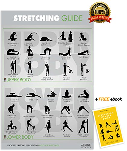 Stretching Guide Poster | Laminated Gym Planner for a Great Stretch Warm Up - Guide to Reduce Tight Muscles & Prevent Injury | Alpine Fitness by Alpine Fitness