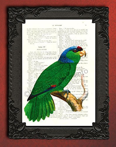 green parrot art print, vintage bird artwork, Green Cheeked Amazon parrot illustration on an original antique book page, parakeet decor