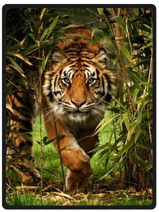 - Fierce Tiger Queen Size Plush Blake Blanket Best Gift 58