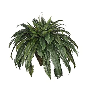 House of Silk Flowers Artificial Fern in Cone Hanging Basket 117