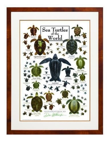 poster-sea-turtles-of-the-world