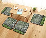 Leighhome Modern Chair Cushions Decor Collection Autumn Trees in Birch Forest September Time View Picture Accessories Gree Convenient Safety and Hygiene W23.5 x L23.5/4PCS Set