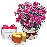 母の日 ギフト 花とスイーツ 人気商品 資生堂パーラー と パープル カーネーション 鉢植え(パープルビアンフェ)のセット