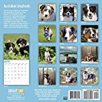 2020 Australian Shepherds Wall Calendar by Bright Day, 16 Month 12 x 12 Inch, Cute Dogs Puppy Animals Aussies Canine 9