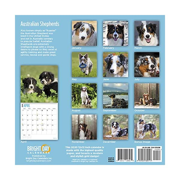 2020 Australian Shepherds Wall Calendar by Bright Day, 16 Month 12 x 12 Inch, Cute Dogs Puppy Animals Aussies Canine 2