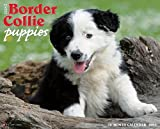 Border Collie Puppies 2015 Wall Calendar
