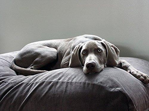 Dog 's Companion Hundebett Maus grau Cord