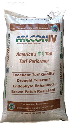 SeedRanch Falcon IV Turf Type Tall Fescue Grass Seeds - 50 lbs. (Best Turf Type Tall Fescue)