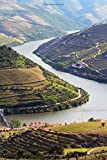 Port Wine Vineyards on Hills and River Douro in Porto Portugal Journal: 150 page lined notebook/diary