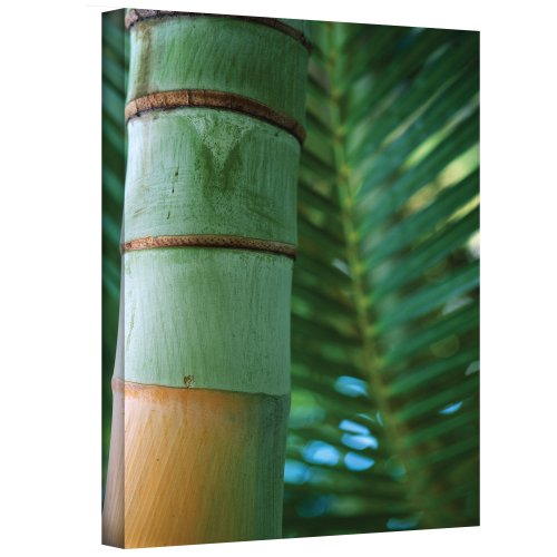 Cheap  ArtWall Bamboo and Fern Gallery Wrapped Canvas by Kathy Yates, 24 by..
