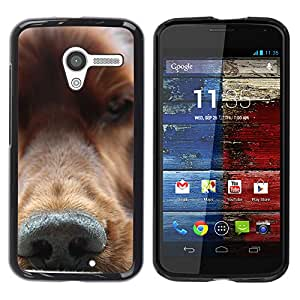 Vortex Accessory Hard Protective Case Skin Cover For Motorola Moto X ( 1St Gen Only ) - Golden Retriever Nose Dog Canine