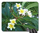 Gaming Mouse Pads,Mouse mat,Frangipani Plant Blossom Bloom Flower Yellow