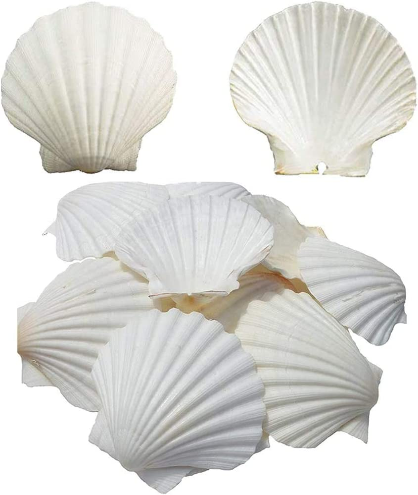 NO/BRAND Scallop Shells for Serving Food,Baking Shells Large Natural White Scallops from Sea Beach for DIY Craft Decor 4-5 Inches
