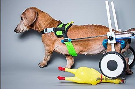 Silla de ruedas ajustable para perro,con altura de la cadera: de ...