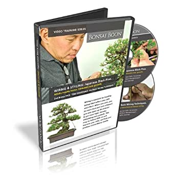 Phenomenal Amazon Com Bonsai Training Video Wiring Styling Japanese Black Wiring Digital Resources Jebrpcompassionincorg