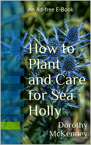 How to Plant and Care for Sea Holly: An Ad-free E-Book