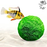 Luffy 1 Marimo Moss Ball - Jumbo Pack of Aesthetically Beautiful & Create Healthy Environment - Eco-Friendly, Low Maintenance & Curbs Algae Growth - Shrimps & Snails Love Them