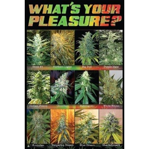 Amazon com: Buyartforless What's Your Pleasure Cannabis